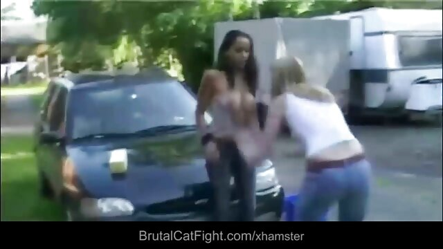猫の戦いポルノ